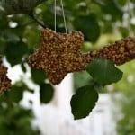 bird feeder IMG_5154