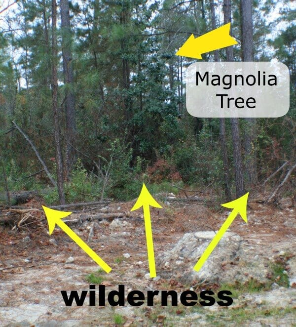 A wood line showing what a magnolia tree looks like in order to make magnolia garland