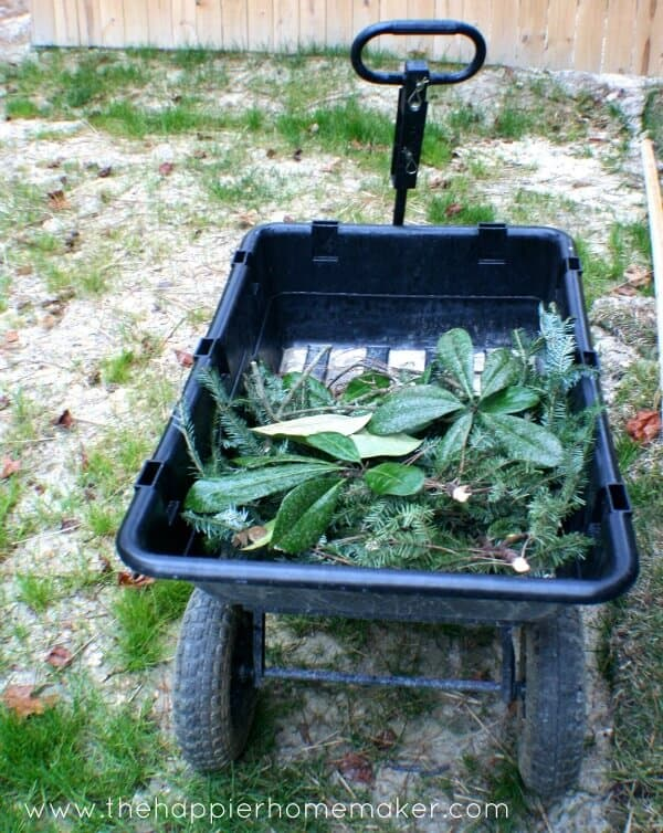 A wheelbarrow with magnolia leaves in it