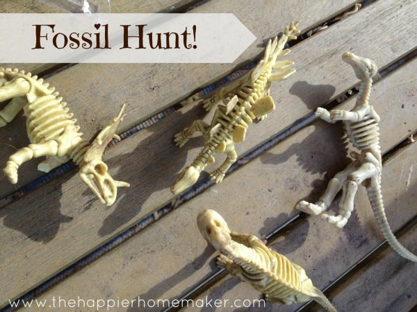 fossil hunt