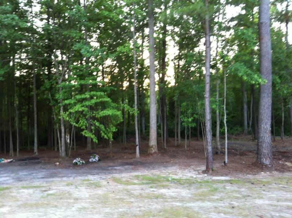 Backyard Forest the great backyard shape-up | the happier homemaker