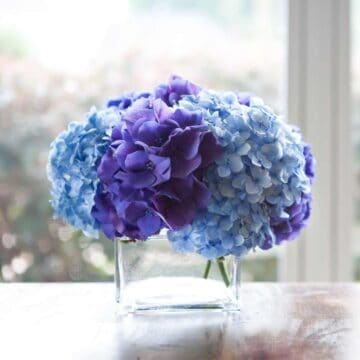 A close up of a glass vase with purple and blue hydrangea flowers