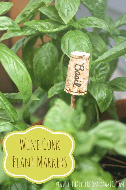 """A DIY wine cork plant marker titled """"Basil"""""""