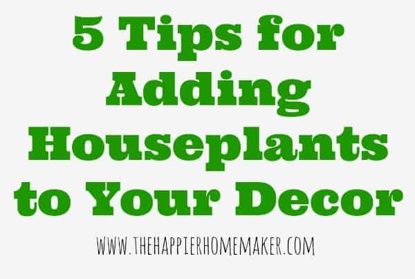 5 tips for houseplants