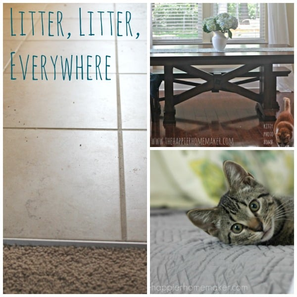 litter cat collage