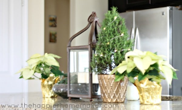 rosemary christmas tree decor
