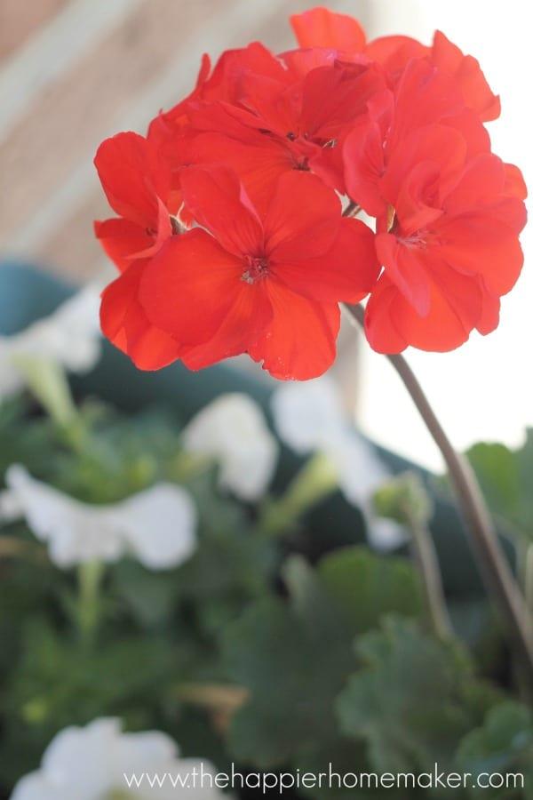 flower front porch