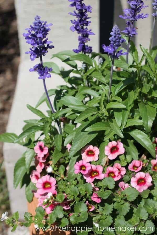 flower pot front porch