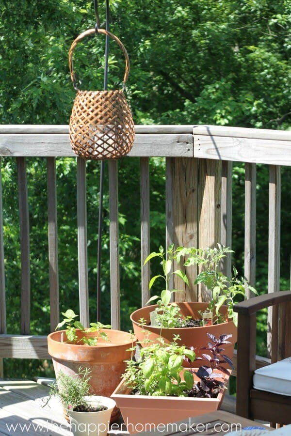 plants balcony summer home tour