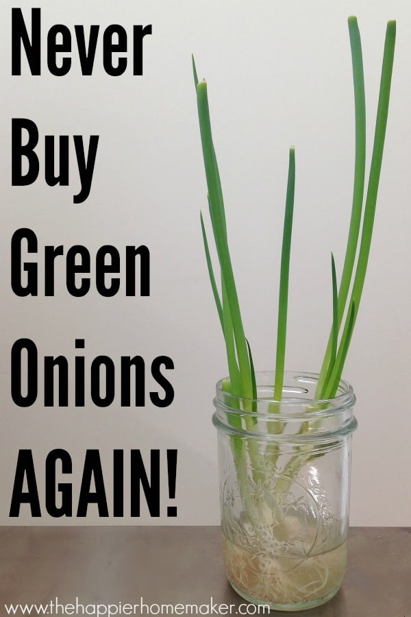 regrow green onions at home save money