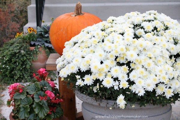 front porch annuals 14