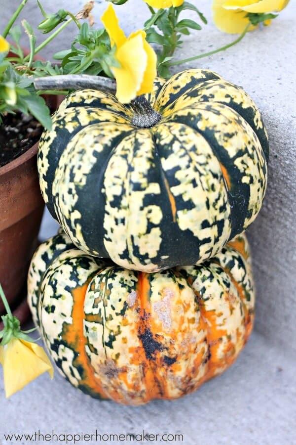 pumpkins on porch 14