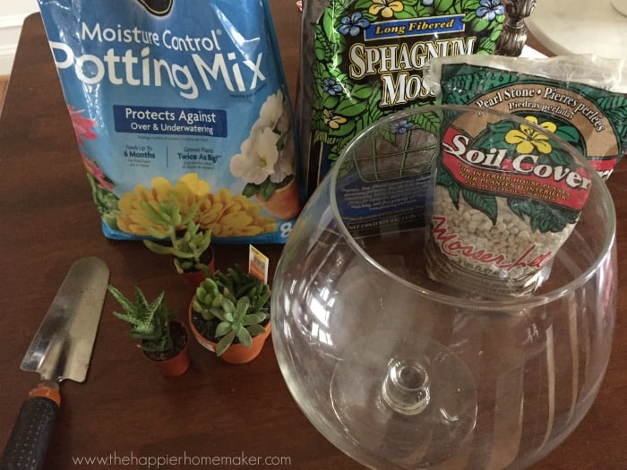 diy terrarium supplies