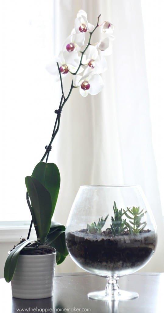 terrarium centerpiece