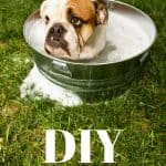 dog in bucket of soapy water