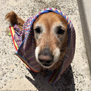 A close up of a dog with a towel around its head