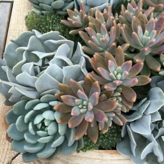 A close up of succulent plants