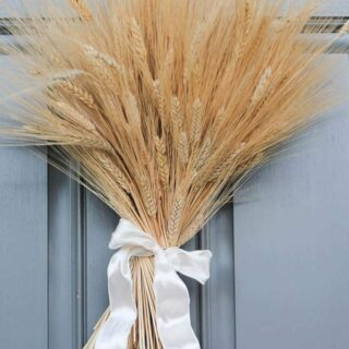 A close up of a wheat bunch tied with a white ribbon used a door wreath