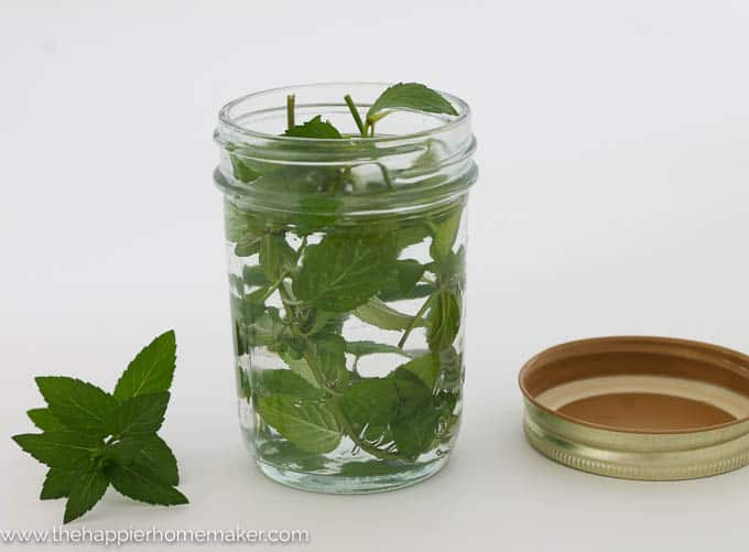 DIY Gift Mint Extract-2