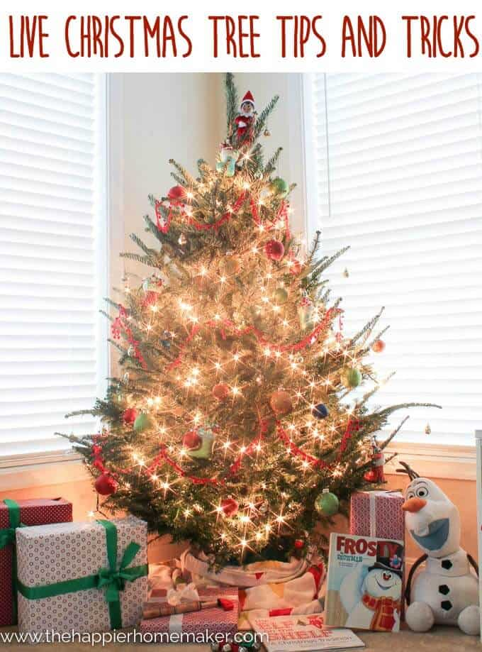 A brightly lit Christmas tree sits in front of a window with presents all around it