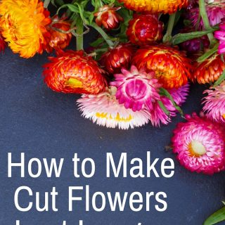 How to make cut flowers last longer-I love having fresh flowers at home but hate when they wilt after just a few days-these tips really work!