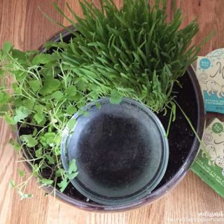 Cat Friendly Water Bowl Planter