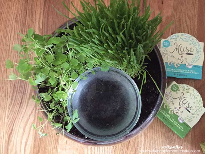 A close up of plants in a cat friendly DIY planter and water bowl