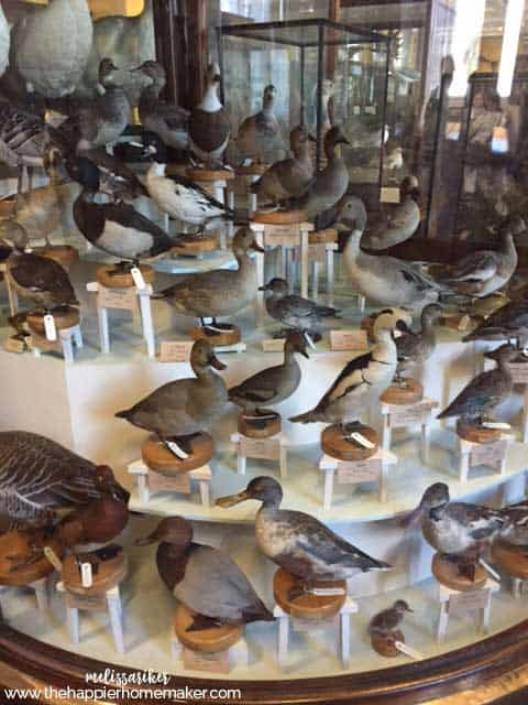 ireland-museum-natural-history