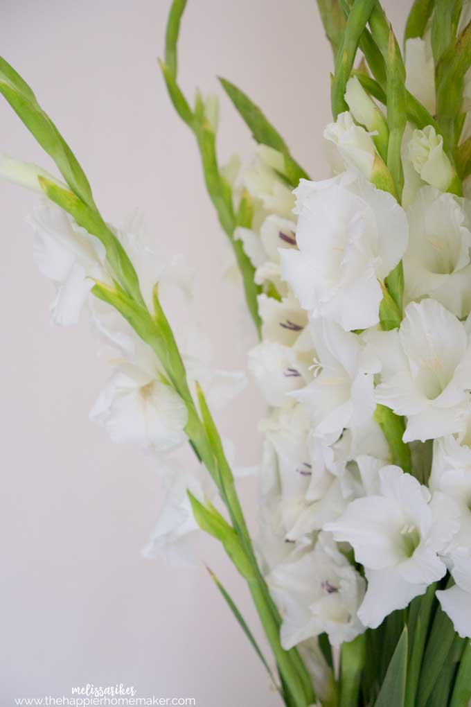A close up of gladiola flowers
