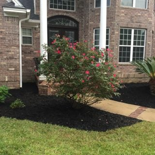 brick home with large rose bush in front