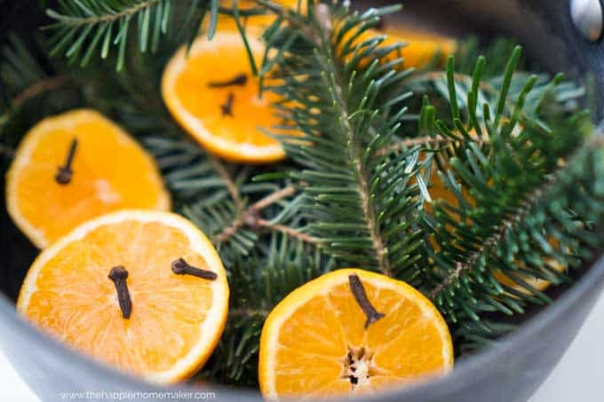 A close up of halved oranges with cloves and pine sprigs