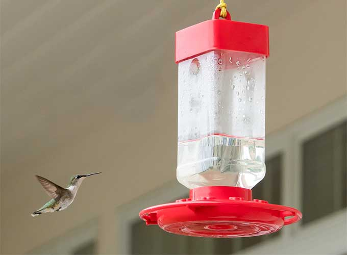 hummingbird approaching feeder