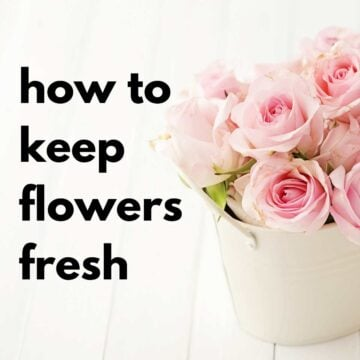 text reading how to keep flowers fresh with photo of pink roses in short white vase
