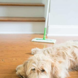 A dog lying on the floor with swiffer in the background
