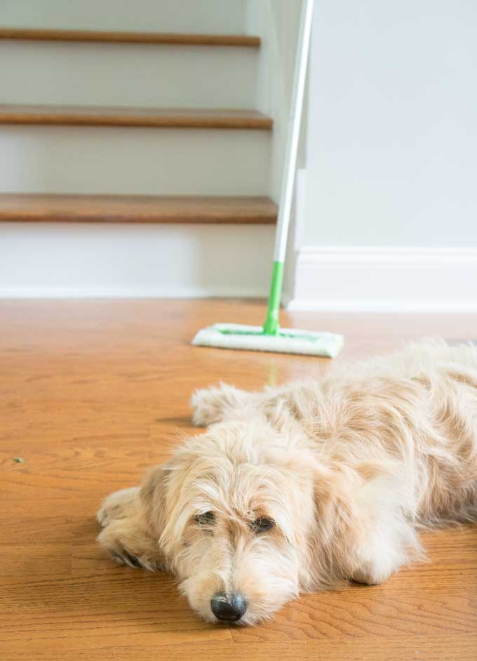 how to clean pet hair