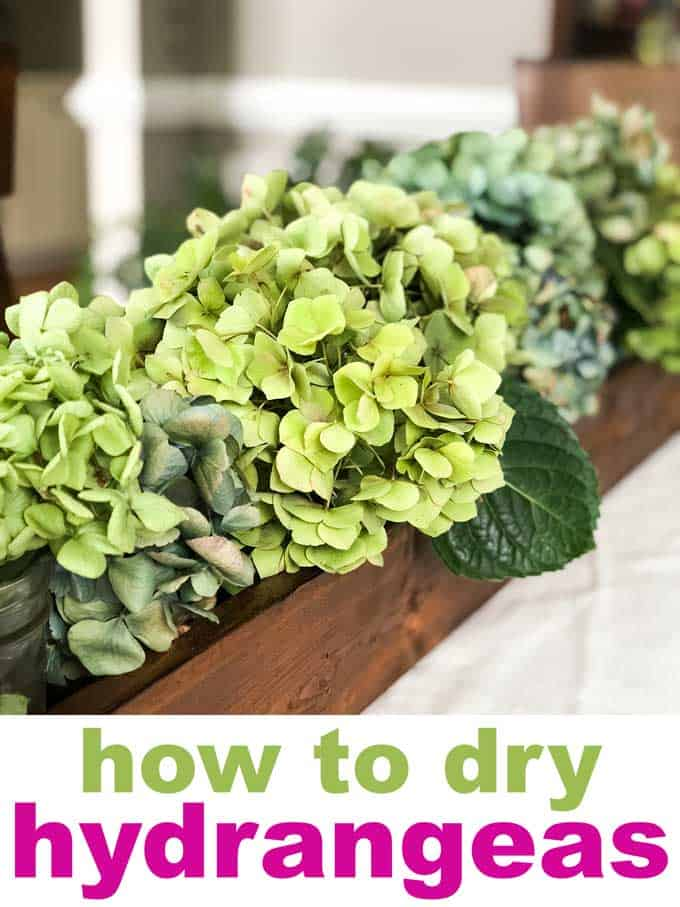 Learn how to dry hydrangeas for crafts or home decor! #hydrangea #craft #decor