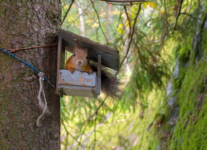squirrel in feeder
