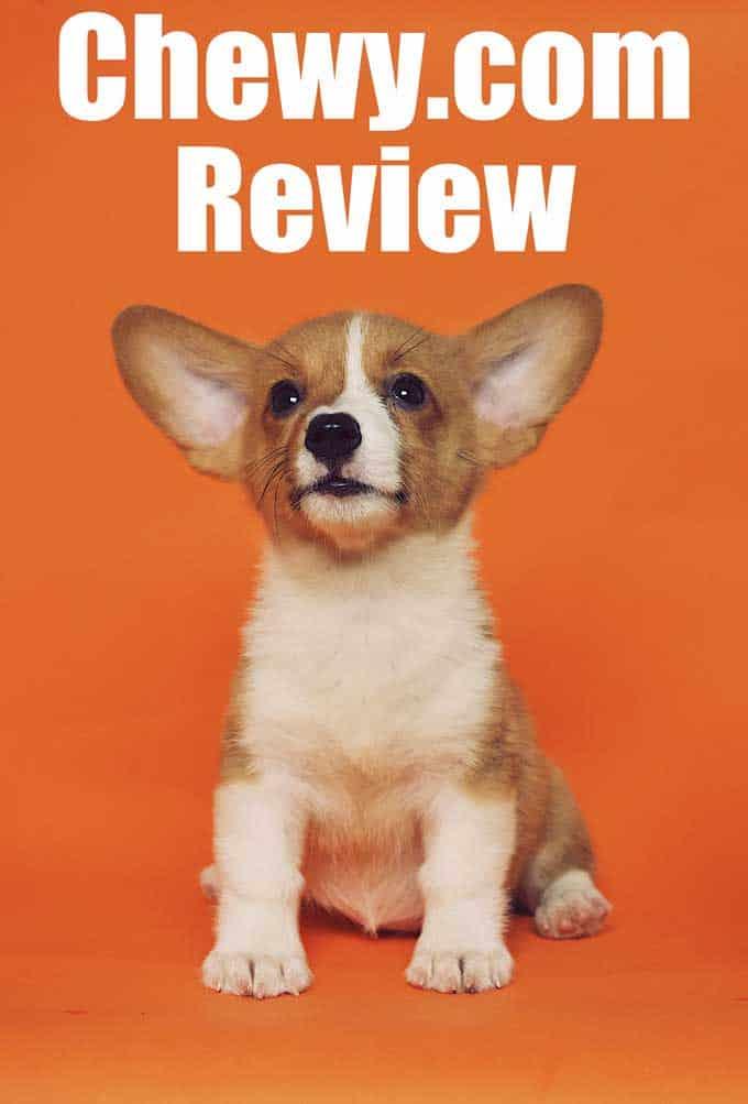 Chewy.com review puppy corgi