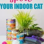 """text reading """"how to spoil your indoor cat"""" over photo of friskies canned cat food stacked next to cat brush, cat grass, and cat toys"""