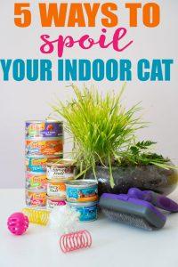 how to spoil your indoor cat