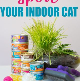 "text reading ""how to spoil your indoor cat"" over photo of friskies canned cat food stacked next to cat brush, cat grass, and cat toys"