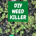 text reading DIY weed killer over photo of weeds in mulch