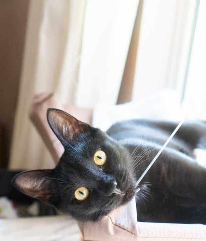 black cat laying in window hammock