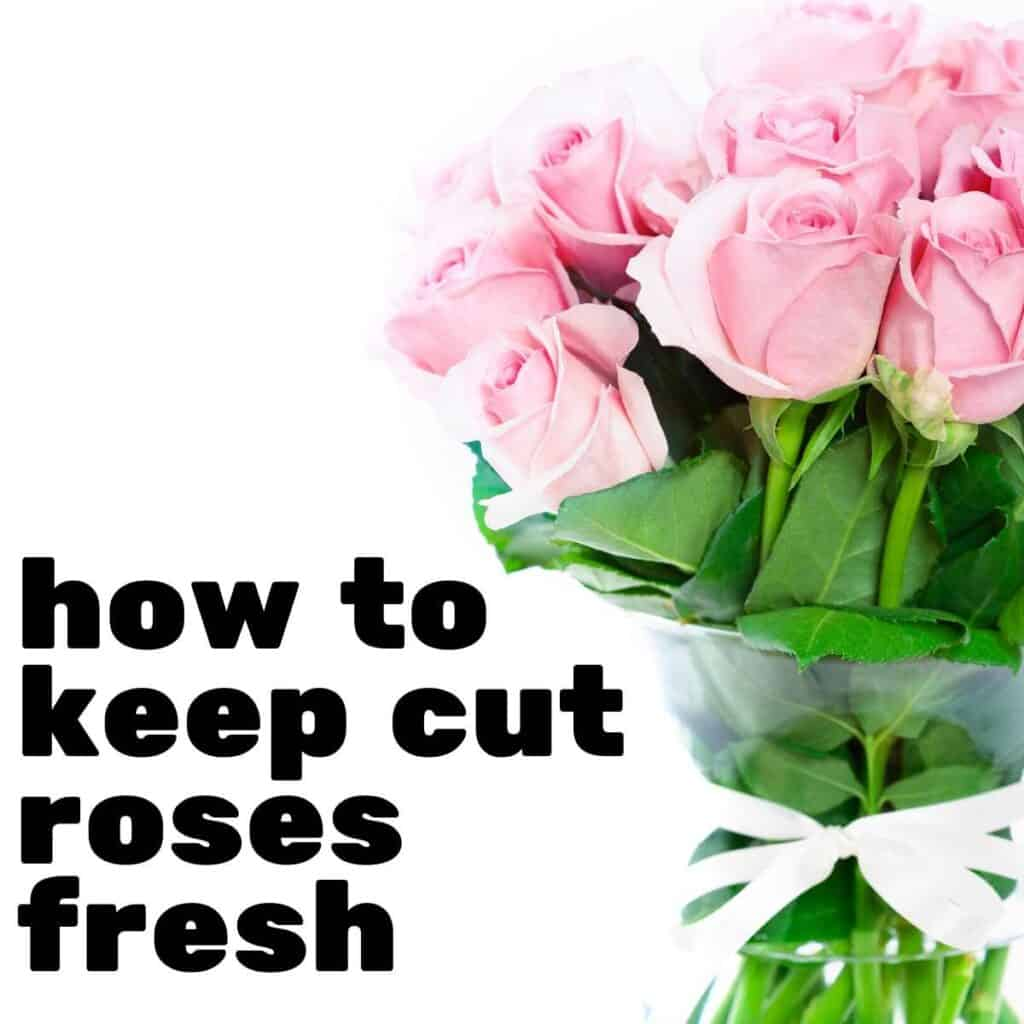 "The words ""how to keep cut roses fresh\"" next to a bouquet of pink roses"