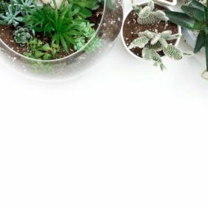 overhead view of succulents in planters